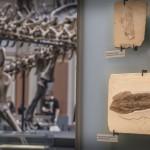 Große und kleine Fossilien harmonisch im Raum ausgestellt.