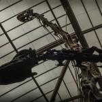 Durch die Überarbeitung sind die Skelette sogar noch höher als früher.