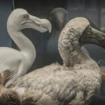 ...oder die Tiere ausgestorben sind, muss man tiefgründig forschen um sie zu rekonstruieren.