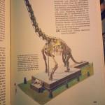In diesem DDR-Kinderlexikon muss der Brachiosaurus auch als Beispiel herhalten.
