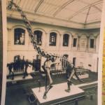 Man sieht die Dinosaurier in ihrer alten Haltung, die Schwänze auf den Boden gestützt.